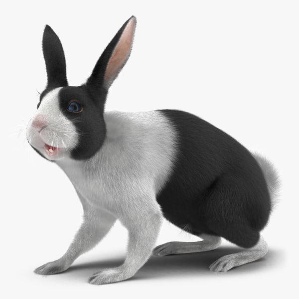 3d black rabbit rigged model