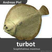 turbot scophthalmus maximus c4d