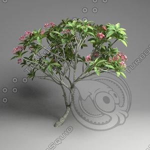 tropical tree obj