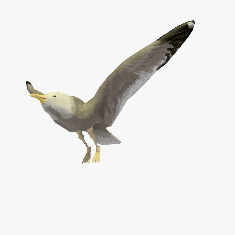single flying seagull animation 3d c4d