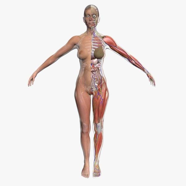 3d model ultimate complete female body
