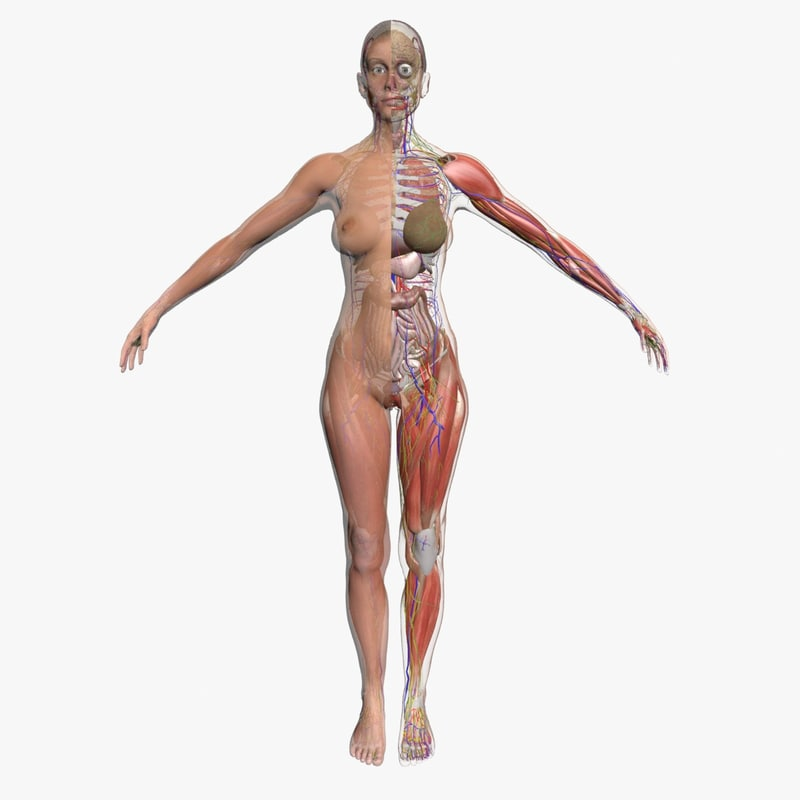 3d model ultimate complete female body