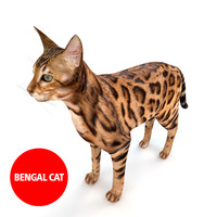 3d model bengal cat fur