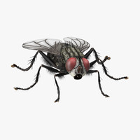 3d standing house fly