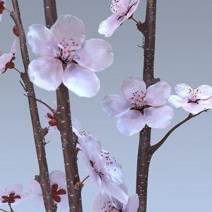3d lwo cherry blossom