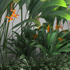 tropical tree set 3d model