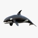 Killer Whale 3D models