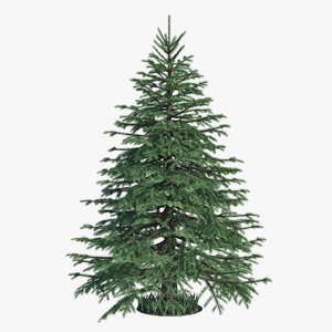 spruce tree 3d obj