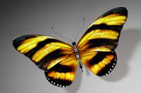 butterfly c4d
