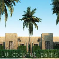 10 coconut palms