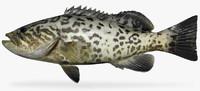 fbx gag grouper