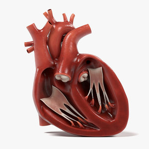 3ds heart section