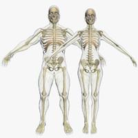 3d max central nervous skeleton combo