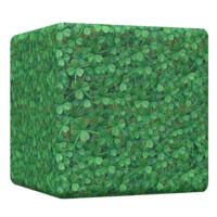 Clover Grass