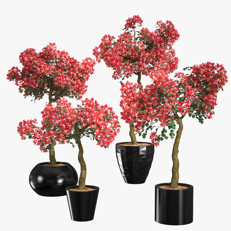 3d model set bougainvillea trees 1