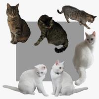 cat 3d 3ds