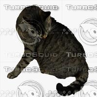 GW Cat A 02