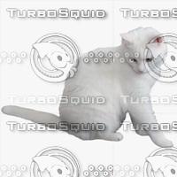GW Cat A 04