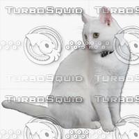 GW Cat A 05