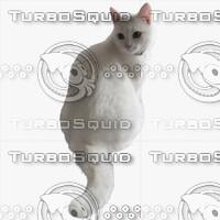 GW Cat A 06
