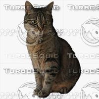 GW Cat A 01