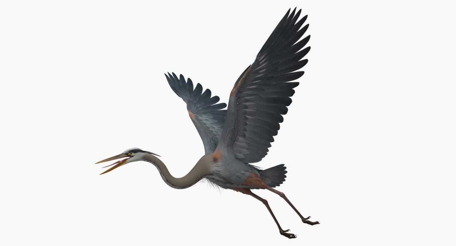 ardea herodias great blue heron obj