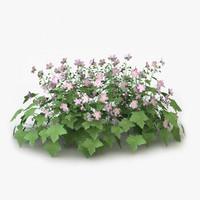 perennial geranium flowers c4d
