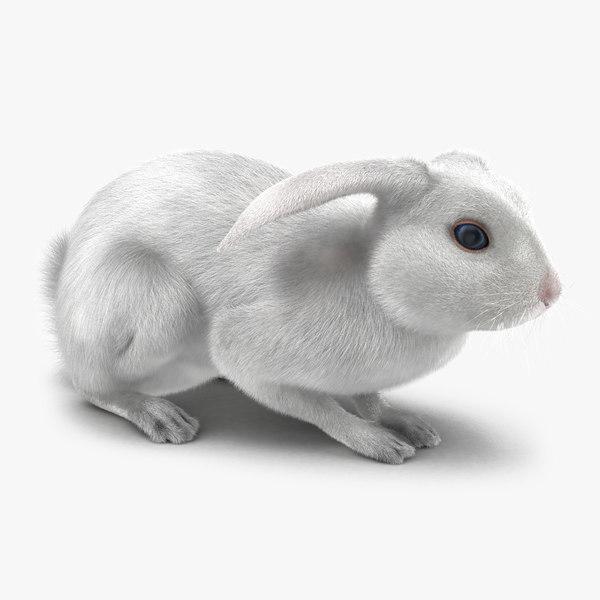 white rabbit pose 2 max
