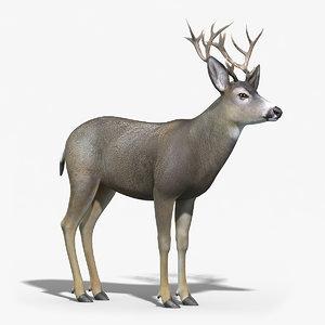 mule deer stag 3d max