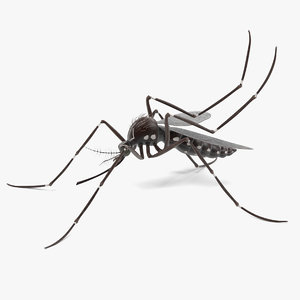3d aedes aegypti