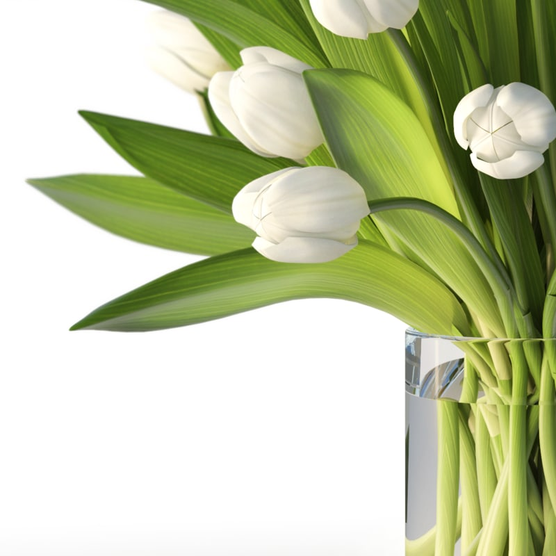 realistic tulips 3d max