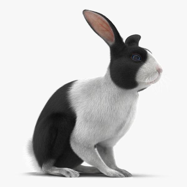 3d model black rabbit pose 3