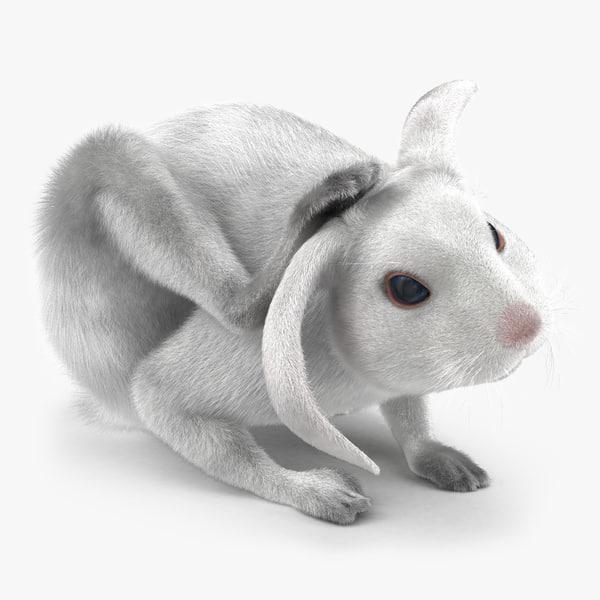 3d model white rabbit pose 4
