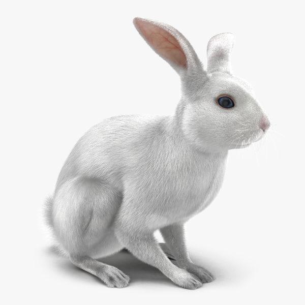 x white rabbit pose 3