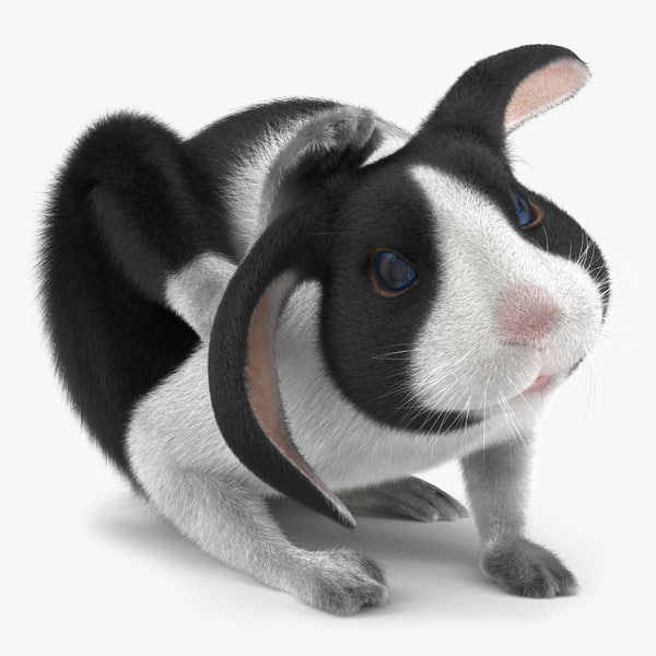 3d model black rabbit pose 4