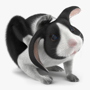 3d model black rabbit pose 4
