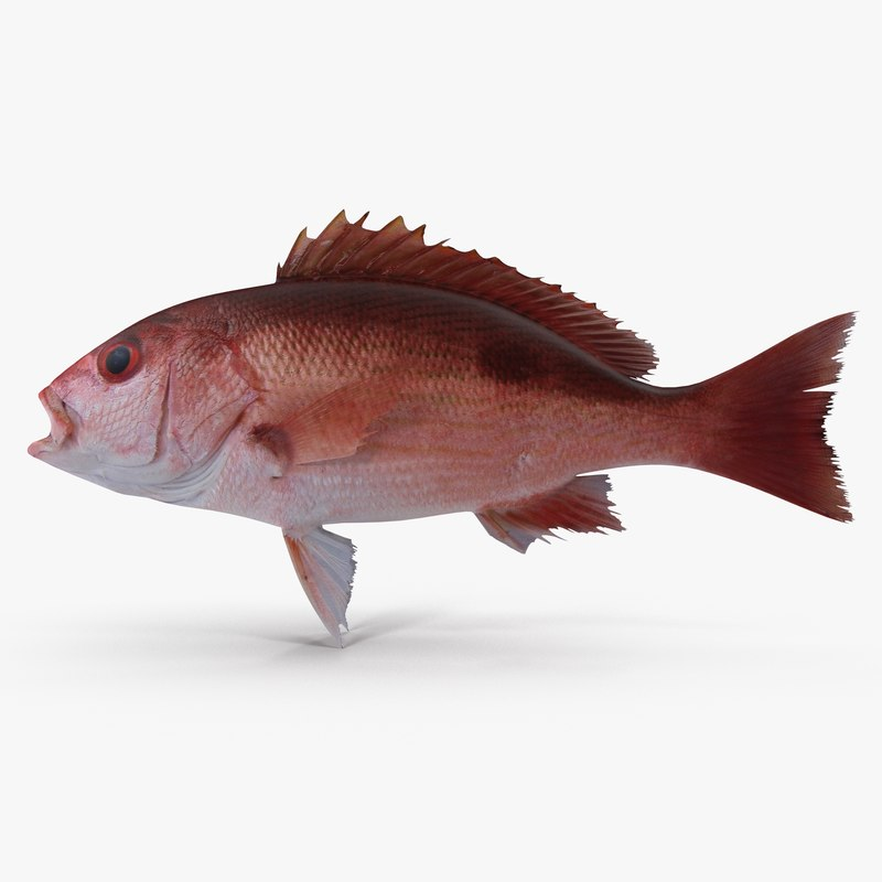 pacific red snapper 3d dxf