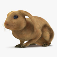 rabbit pose 2 3d model