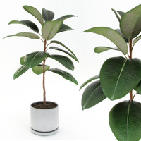 3d model of ficus elastica decora small