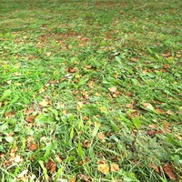 Fall Grass Seamless