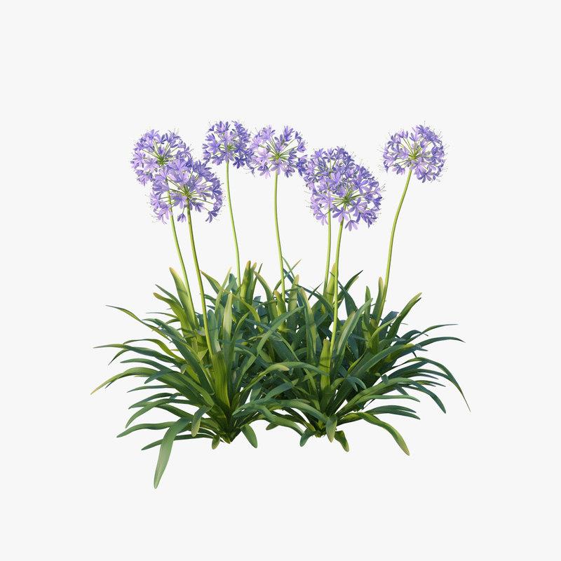 agapanthus africanus flower 3d max