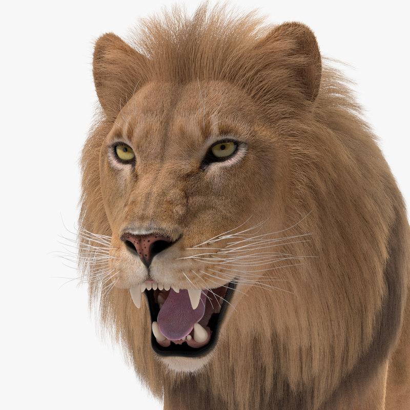 lion fur ma