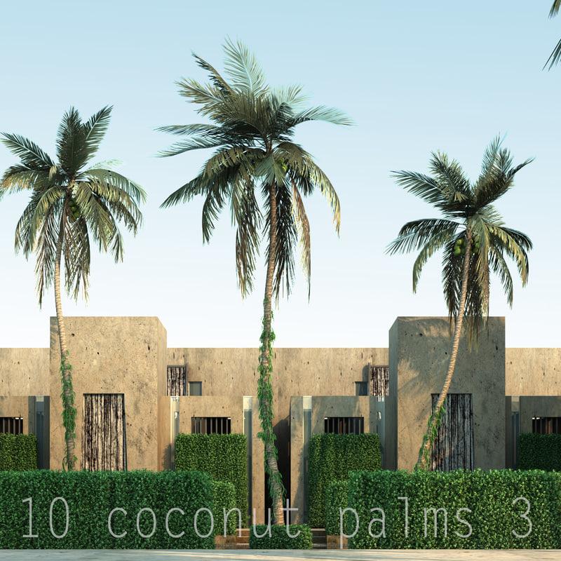 3d 3 coconut model