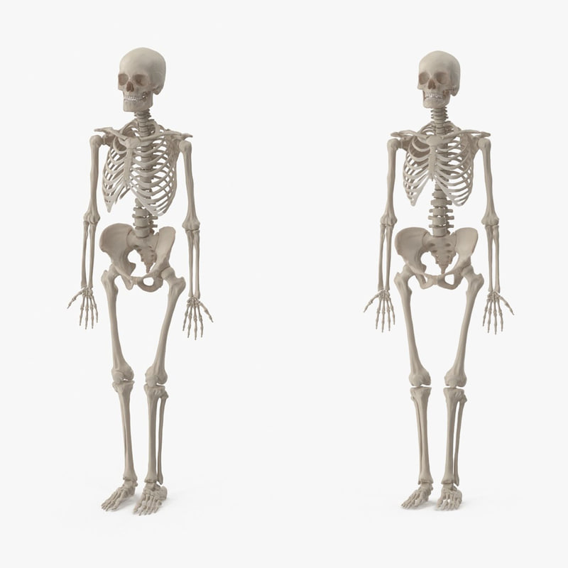 3d Male Female Skeleton Set Model