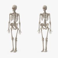3d male female skeleton set model
