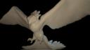 phoenix 3D models