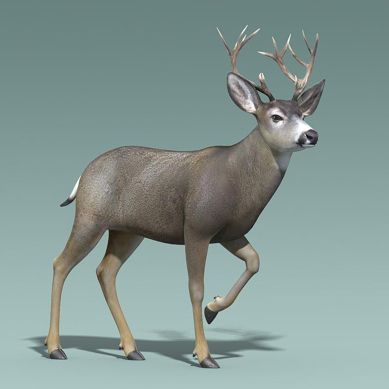 3d Mule Deer Stag Rigged Model