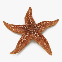 Starfish 2 Rigged