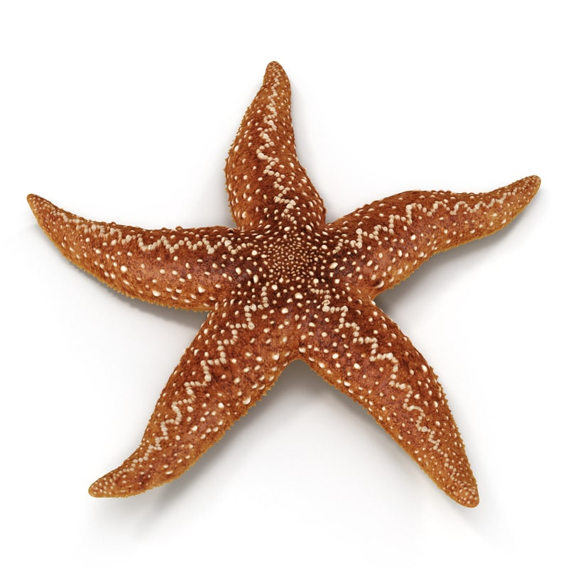 starfish 2 rigged max