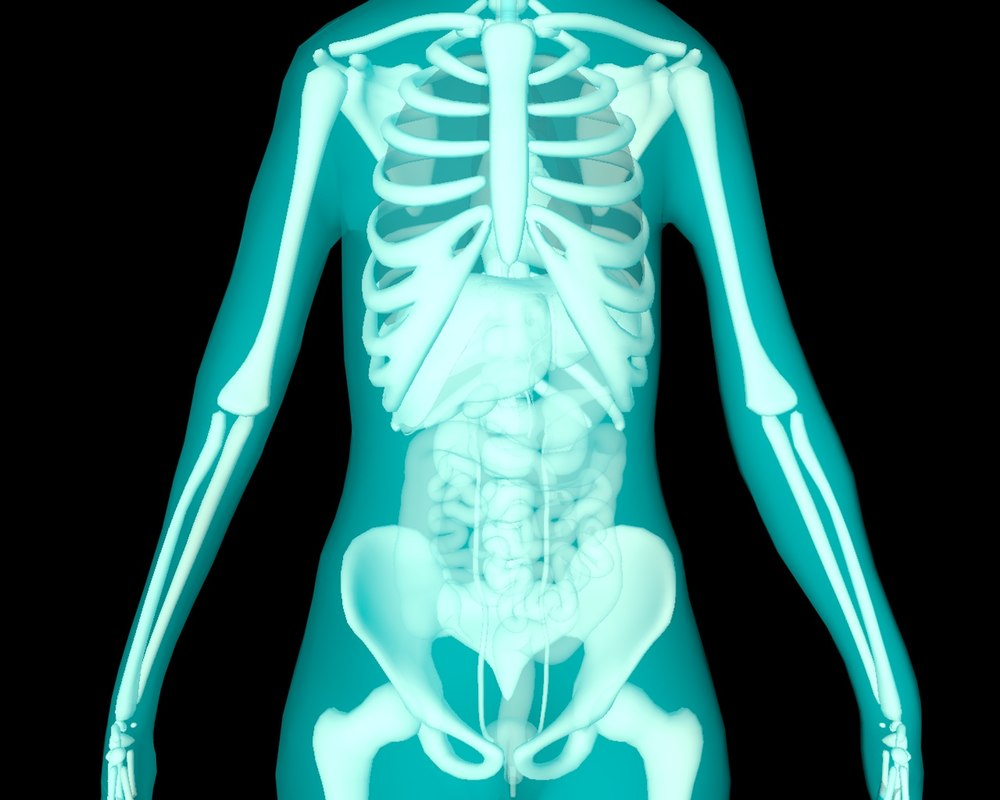 xray thorax abdomen internal organs 3d 3ds